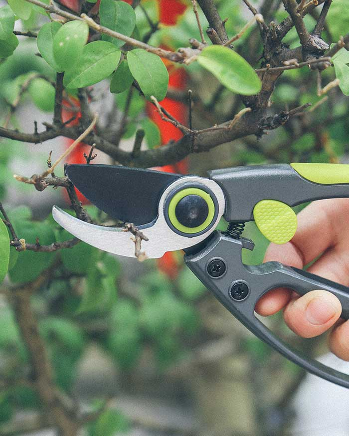 How to use oil for garden tools?